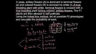 Repeat youtube video How to solve genetics problems with forked line method