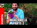 Te de manzanilla: Como sembrar en casa Parte 2 @cosasdeljardin