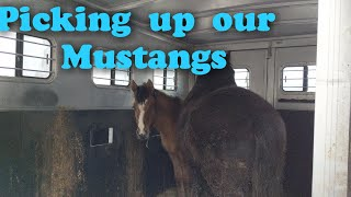 Picking up the Mustangs, not what we expected!!