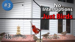 3. Cat TV in 4K 200+ minutes of Birds Feeding with Sound  NO ADs Interrupting
