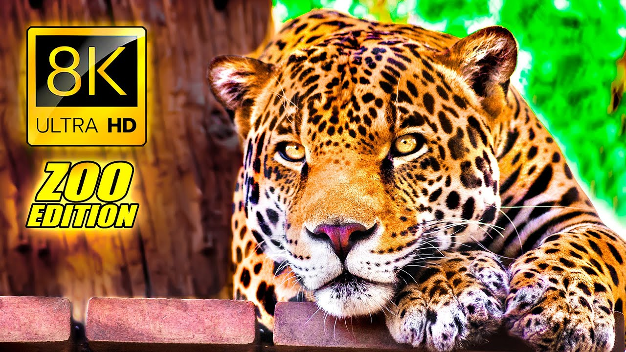 Visit to the Zoo in 8K ULTRA HD / An Amazing Zoo Trip