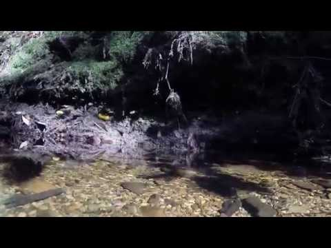 Hiking and snorkeling in Butano State Park