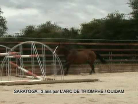 Saratoga, stallion by L'arc de triomphe / Quidam / Electre