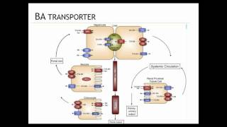 The Role of Bile Acids in Inflammation