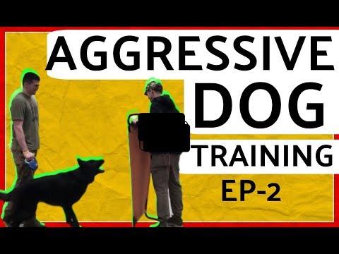 Barking Aggressive German Shepherd Behavior Modification Dog Training Part 2