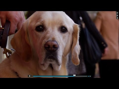 Trailer: A Friend in Sight (guide dog documentary)