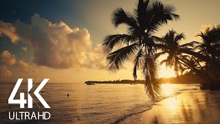 Download 8 HOURS Calm Ocean Waves Sounds - Tropical Beach Sunrise 4K Video