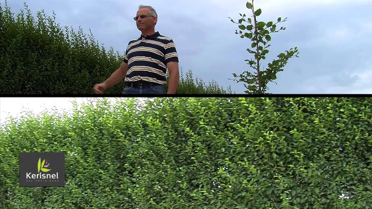 Bien choisir son arbre pour son jardin et r ussir sa plantation youtube - Dutronc petit jardin youtube limoges ...