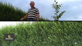 Bien choisir son arbre pour son jardin et réussir sa plantation