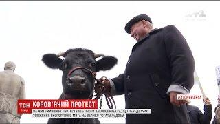 У Житомирі кілька десятків мітингарів вийшли на пікет із коровою(UA - У Житомирі кілька десятків мітингарів вийшли на пікет із коровою. Люди виступають проти законопроекту,..., 2017-02-24T05:53:53.000Z)