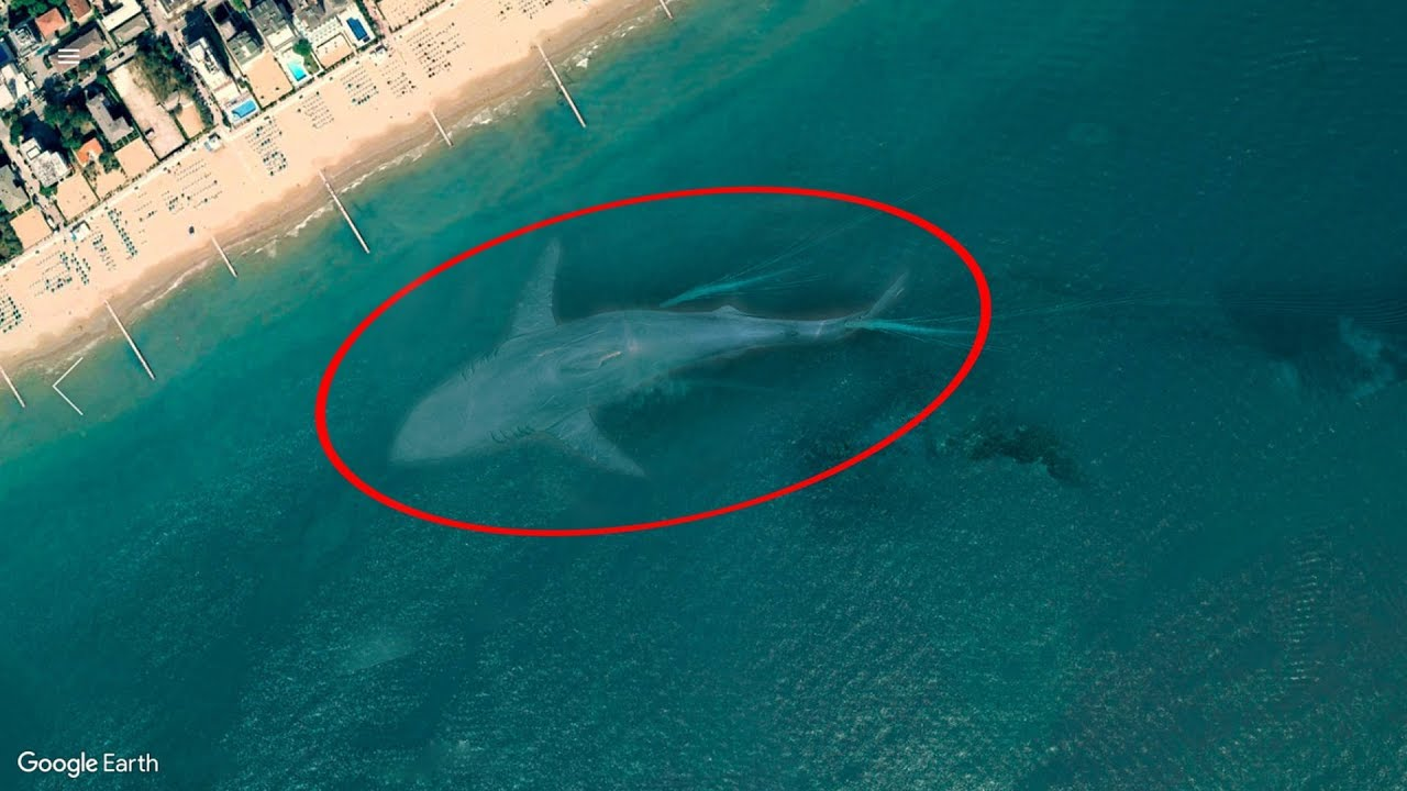 7 Mysterious Deep Sea Creatures Spotted On Google Earth #2