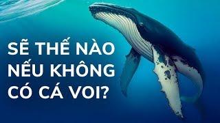 Điều gì xảy ra nếu không có cá voi trên trái đất
