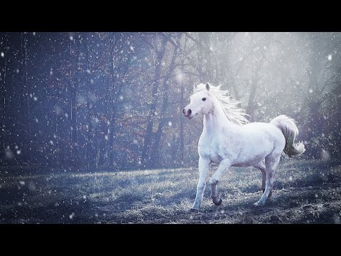 Slow Horse Trot Sound ASMR/Horse Trotting On Concrete Sound Effect/Calm Relaxation