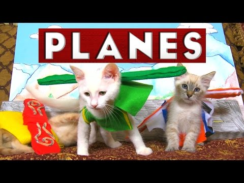 Disney's Planes (Cute Kitten Edition)