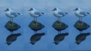 Одинокая чайка!