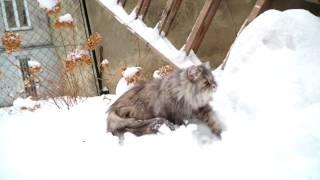 Katze das erste Mal im Schnee