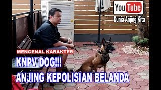 Anjing Polisi Kerajaan Belanda - KNPV Dog
