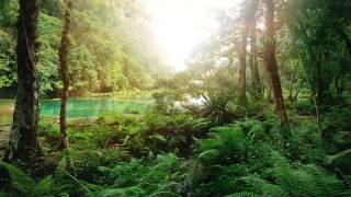 Relaxing Rainforest Sounds, Birds Chirping, No Music (10 Hours)