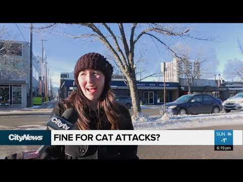 Should an owner be fined for a cat attack?