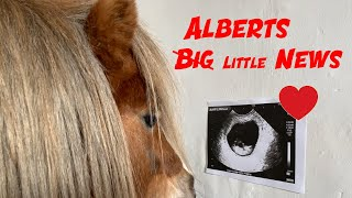 Albert has BIG NEWS this Valentine's Day | Funny Animals | Cute Ponies