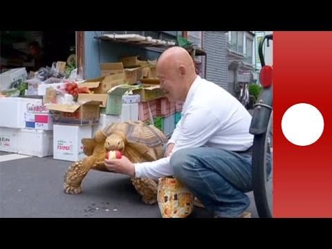 Why Walk A Dog When You Could Walk A Yearold Tortoise YouTube - Man walks pet tortoise through tokyo