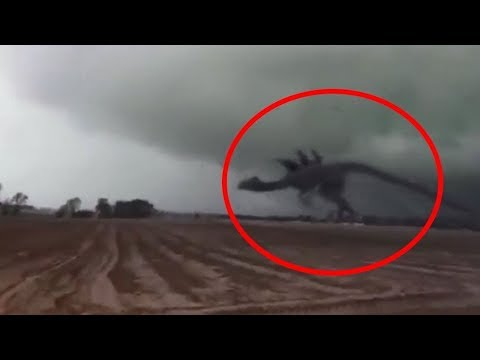 10 Giant Mysterious Creatures Caught on Camera