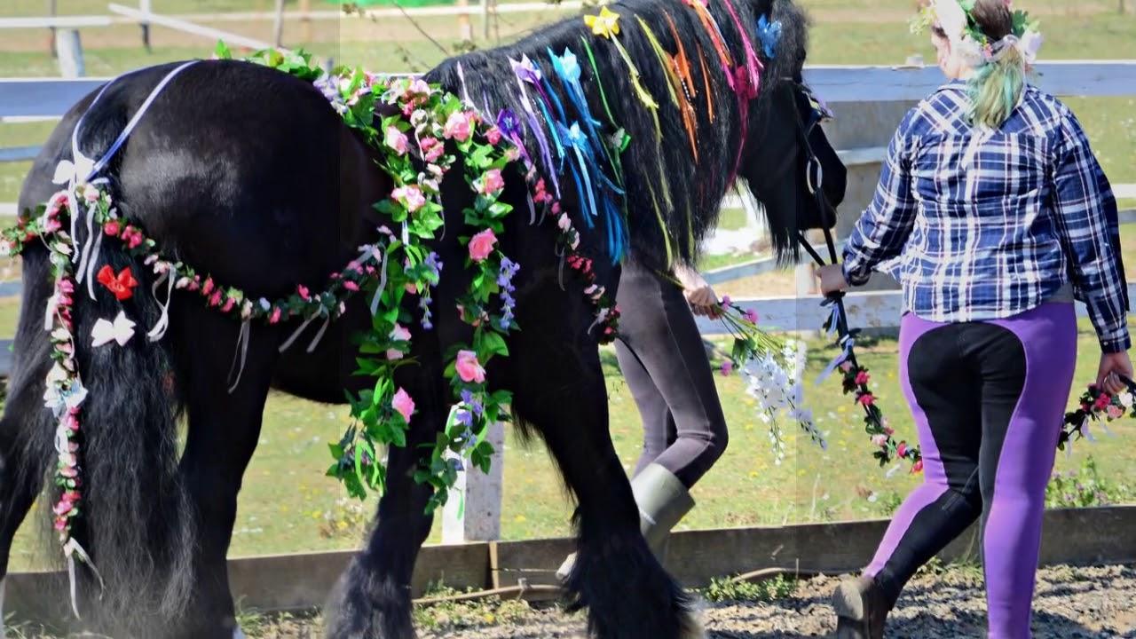 Sunshine Riding School | Horse Riding in Luton