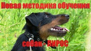 Методика дрессировки собак ЛИРОС