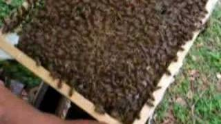 China Lychee Bee Farm part 2 of 2