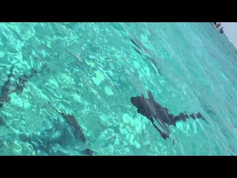 Snorkeling and sharks Prt.2 - Isla Bonita, Belize