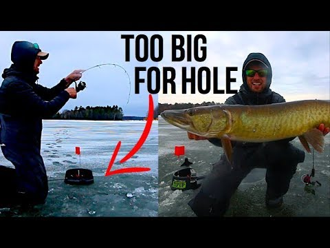 Ice Fishing For BIG WALLEYE, PIKE And MUSKY