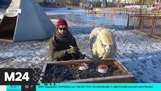 Синоптики рассказали о погоде в пятницу в Москве - Москва 24