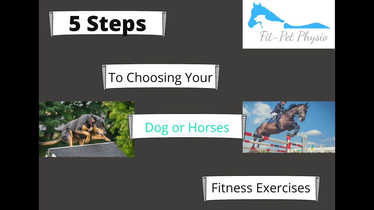 5 Steps to choosing your dog and horse's fitness exercises