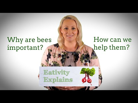 Why are bees important and how can we help them?