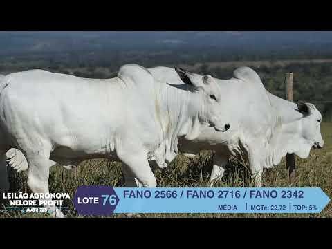 LOTE 76 FANO 2566 X 2716 X 2342