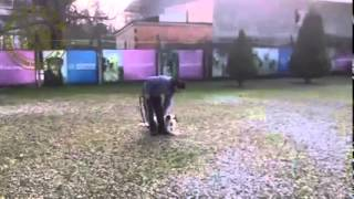 Hearing Dogs Ears Obedience Education Training Deaf