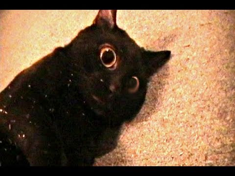 Thumbnail: Talking Kitty Cat 7.5 - Sylvester's Catnip Overdose