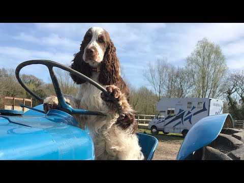 Bonnie the yard helper