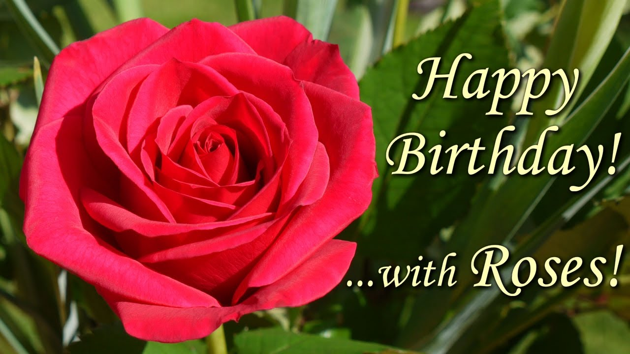 Happy Birthday Song With Roses Beautiful Flowers Pictures Wishing