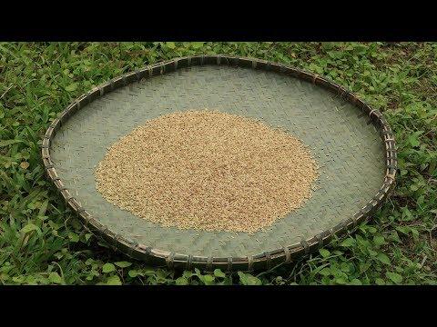 Primitive Technology: Farming techniques (Seed treatment) Part 1
