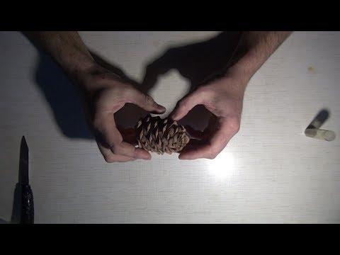 Как вырастить кедр из шишки