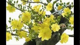 Hòa Tấu- Ly rượu mừng Xuân thumbnail