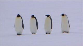Gambar cover Nell'ultima glaciazione il pinguino imperatore patì il freddo