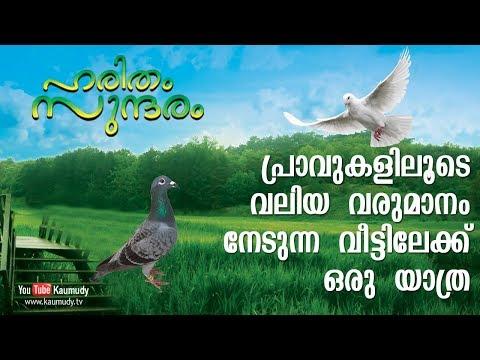 Huge profit from Pigeon farming   Haritham Sundaram   Kaumudy TV