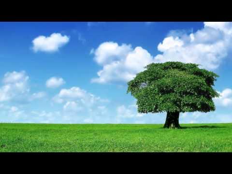 [1 Hour] Healing Tambura -  Heart Chakra Meditation Music   Taanpura Sounds