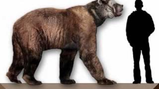 LOQUENDO, animales prehistoricos parte 7 arctodus simus