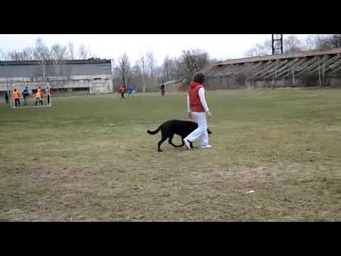 видео: Бомон Росс Евразия  Сдача БН