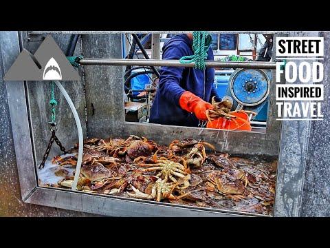 Warning: Live Crab Cook & Eat ( Half Moon Bay Boat Tour Series Part 1 )