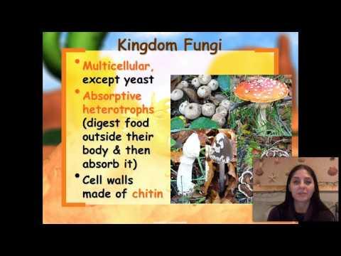 Six Kingdoms of Living organisms