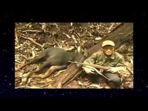 Go to the forest with famous Cambodia hunter - Hunting and Cooking wild chicken